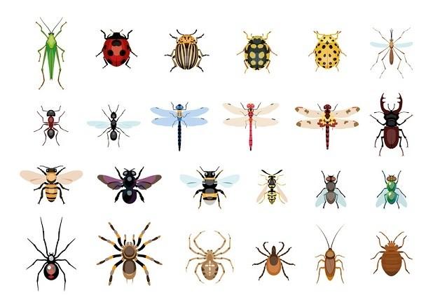 Piqûres d'insectes : les dix ennemis de l'été - Conseils santé