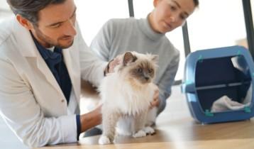 Coryza du chat : symptômes, traitements et prévention