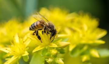 Piqûre de guêpe, abeille : quels réflexes ?
